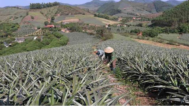 Tổng hợp tất cả đặc sản Bắc Giang: - VietFlavour