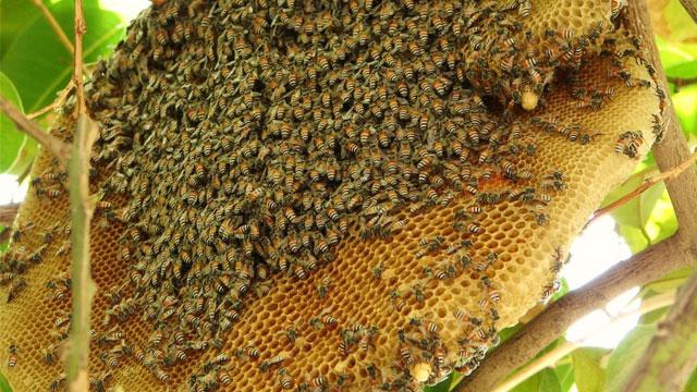 Tổng hợp đặc sản Cà Mau: Mật ong rừng U Minh - Vietflavour
