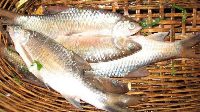 Tổng hợp tất cả đặc sản Yên Bái: Cá sỉnh Nậm Thia - VietFlavour.com