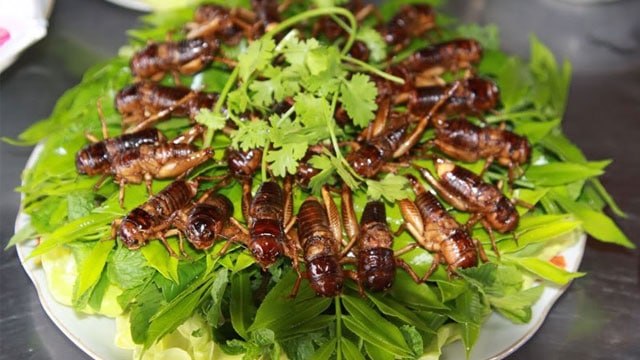 Dế mèn nay đã trở thành món đặc sản được ưa chuộng trong các nhà hàng khắp cả nước - VietFlavour.com