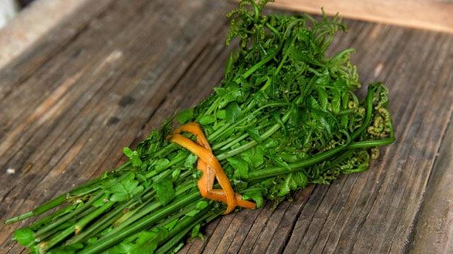 Rau dớn - Thứ rau rừng ngon được nhiều người quan tâm - VietFlavour.com