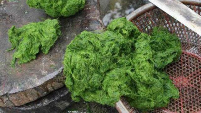 Rêu suối - Món ắn đặc sản của người Tây Bắc - VietFlavour.com