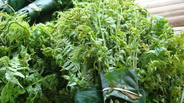 Rau dớt là một loại rau rừng rất được ưa chuộng bởi hương vị dòn ngon - VietFlavour.Com