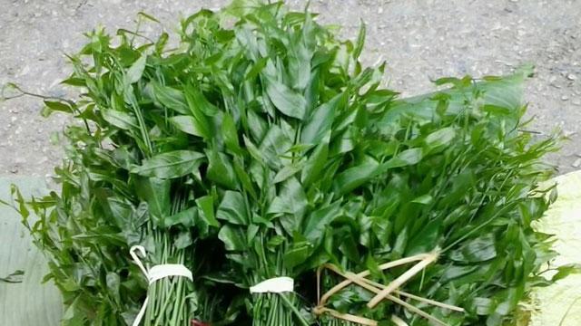 Rau sắng là một trong các loại rau rừng trở thành món rau đặc sản của người dân Tây Bắc - VietFlavour.Com