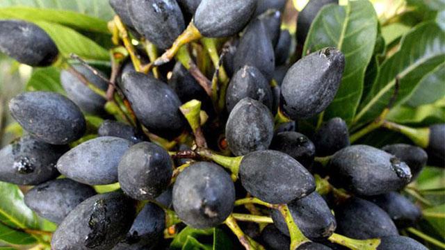 Trám đen là một loại quả dùng làm gia vị và màu cho các món ăn đặc sản ngon nổi tiếng